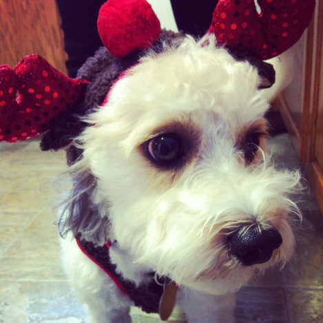 Sam wearing his reindeer costume.